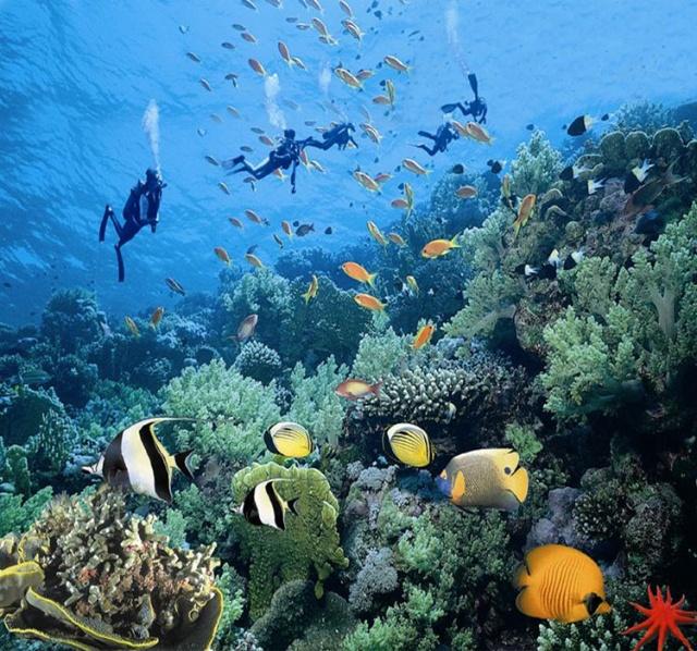 壁纸 海底 海底世界 海洋馆 水族馆 桌面 640_598