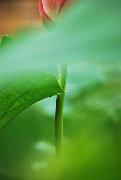 绿色雨中风景 壁纸