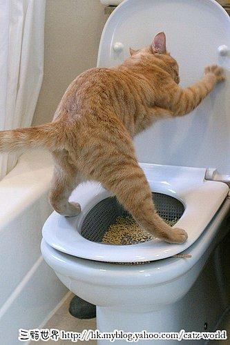 教猫咪用马桶