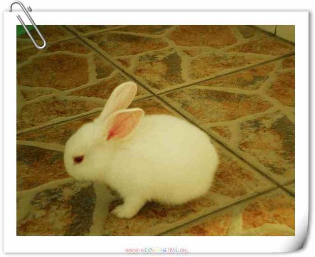 壁纸 动物 兔子 640_521