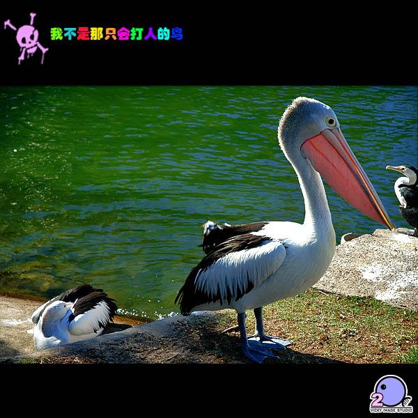 壁纸 动物 鸟 鸟类 600_600