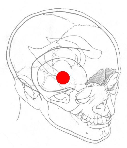 中动脉光镜结构图手绘
