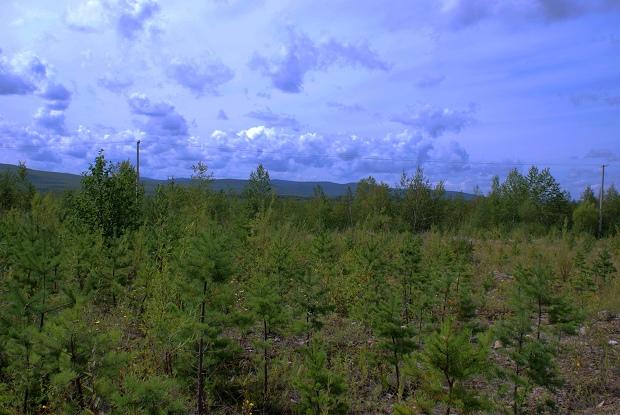 大兴安岭森林稀疏区