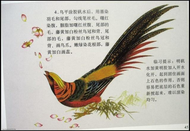 跟徐鸿义学习工笔画            工笔白描及牡丹染法