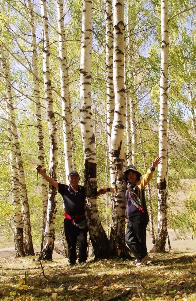 走过白桦又是杉树,山上桦树和杉树日夜相伴,同枯同荣,这是大自然绝妙