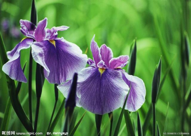 世界上最的花_佛 教 圣 花 之 一 鸡 蛋 花
