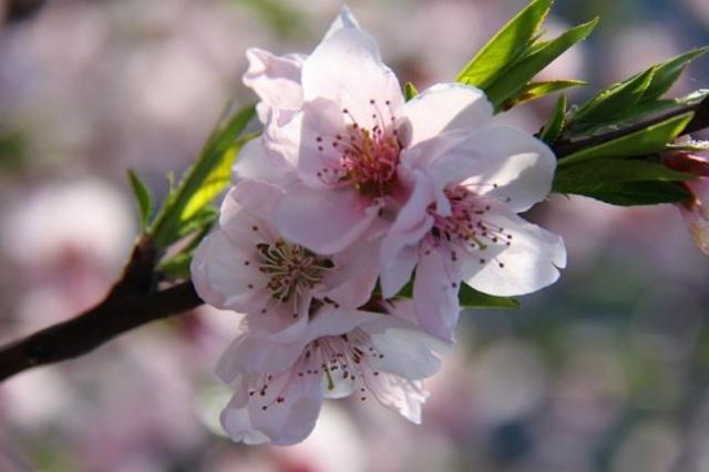在那桃花盛开的地方2-chuntian-我的搜狐