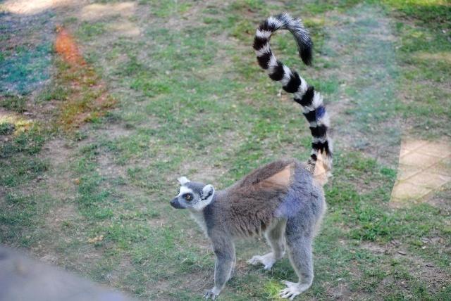 唯一的缺陷就是孩子和动物互动比较少,不像北京动物园,孩子们能给小